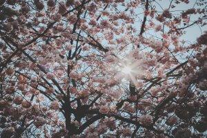 Vårens kemi
